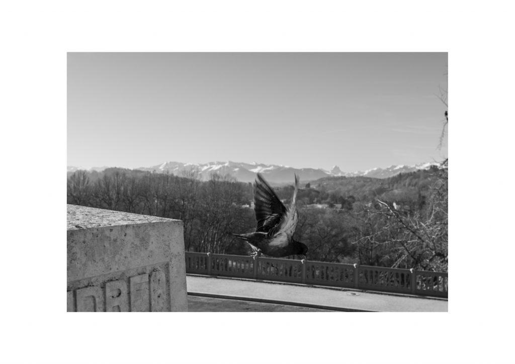 Monument aux morts de Pau, envol d'un pigeon
