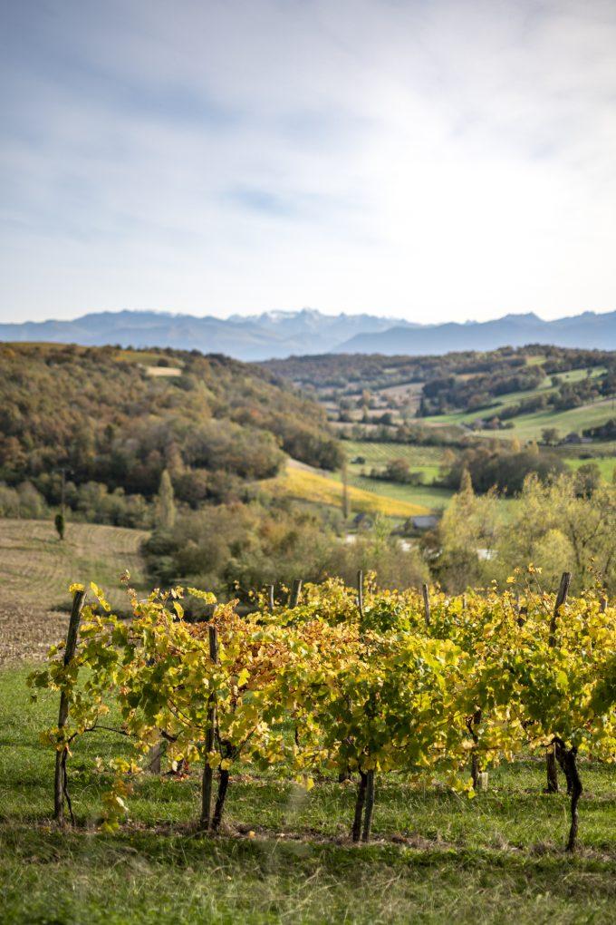 Vignes des vignobles du Jurançonnais avec en arrière plan la chaîne de Pyrénées
