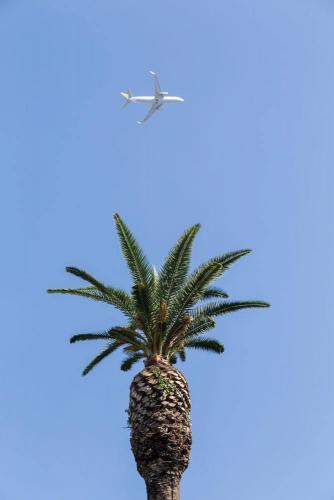 Naples / Napoli, avion palmier